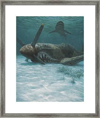 Sand Shark Framed Print by Randall Scott