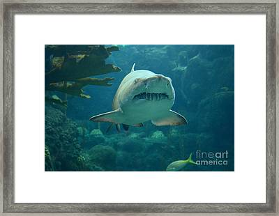 Framed Print featuring the photograph Sand Shark by Robert Meanor