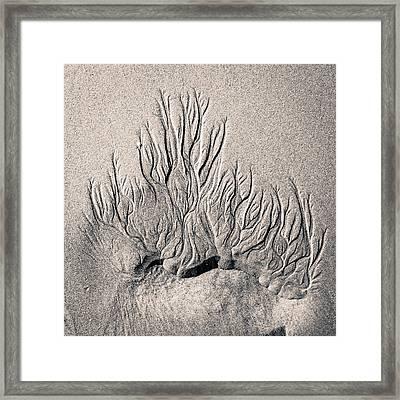 Sand Trails Framed Print