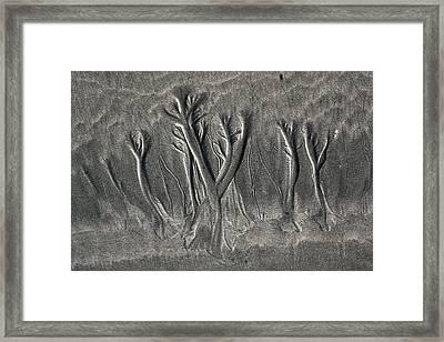 Sand Trees Framed Print