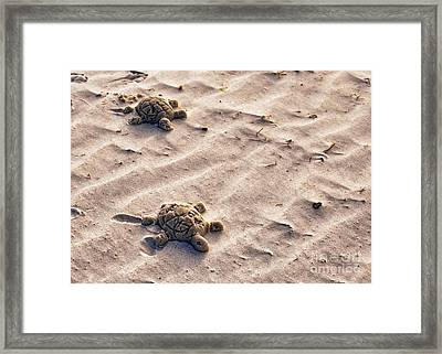 Sand Turtles Framed Print