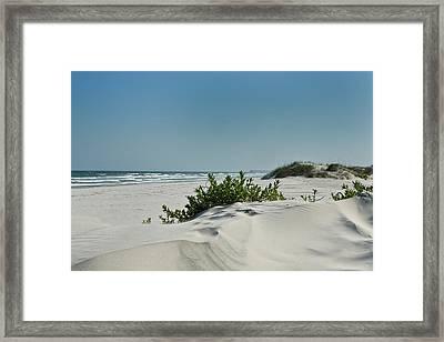 Sand Veggie Framed Print by Denis Lemay