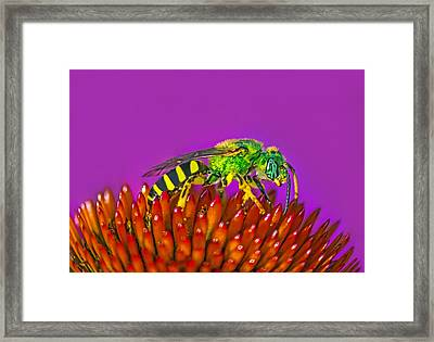 Sand Wasp Framed Print by Marion Johnson