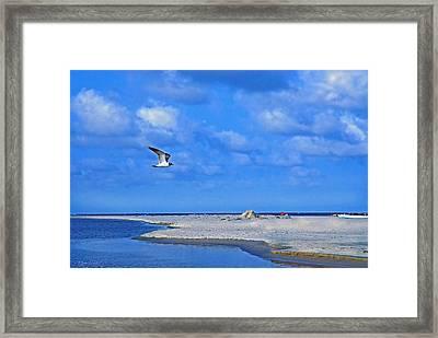 Sandbar Bliss Framed Print by Marie Hicks