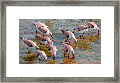 Sanderlings At Alamitos Bay Framed Print by Timothy Bulone