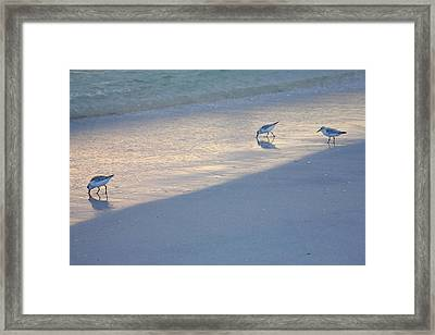 Sanderlings At Dusk I  Framed Print by Steven Ainsworth