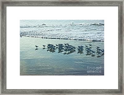 Sanderlings Framed Print by Nur Roy