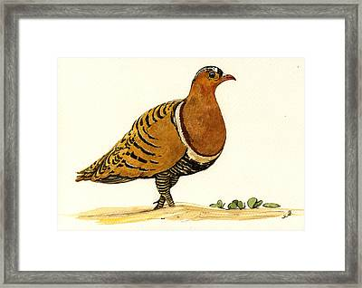 Sandgrouse Framed Print by Juan  Bosco