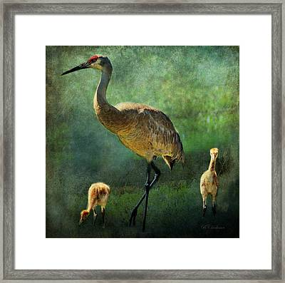 Sandhill And Chicks Framed Print