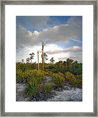 Sandhill And Clouds II. Lake Lizzie Preserve. Framed Print