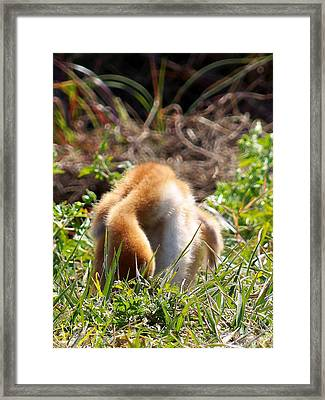 Framed Print featuring the photograph Sandhill Chick 008 by Chris Mercer