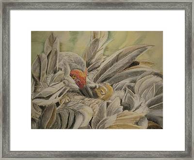 Sandhill Crane And Chick Framed Print