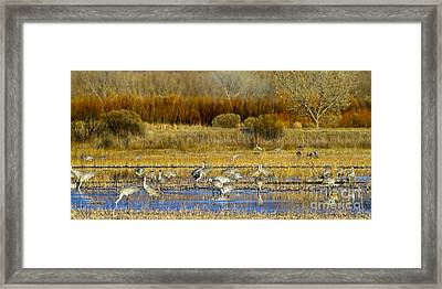Sandhill Flock In Fall Framed Print