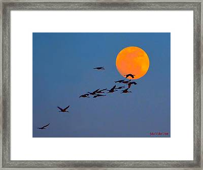 Sandhill Crane Migration Framed Print by Julie Dant