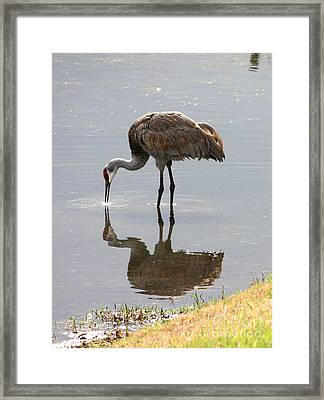 Sandhill Crane On Sparkling Pond Framed Print