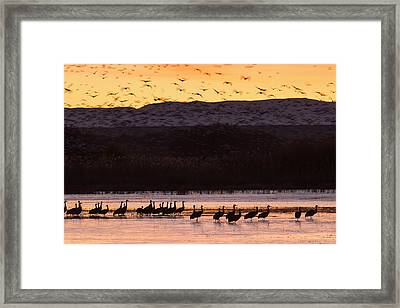 Sandhill Cranes And Other Waterfowl Framed Print