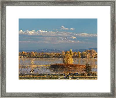 Sandhill Cranes And Waterfowl At Bosque Framed Print