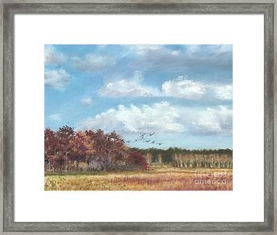 Sandhill Cranes At Crex With Birch  Framed Print by Jymme Golden