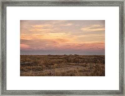 Sandhill Cranes At Sunset Framed Print