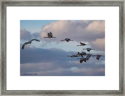 Sandhill Cranes Framed Print by Beverly Parks