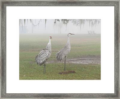 Sandhill Cranes In A Foggy Morning Framed Print by Zina Stromberg