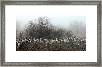 Framed Print featuring the photograph Sandhill Cranes In The Fog by Farol Tomson