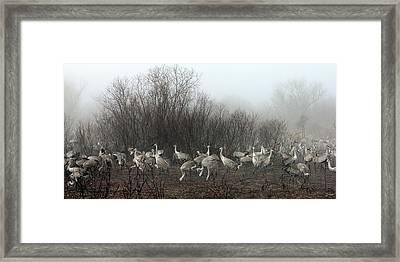 Sandhill Cranes In The Fog Framed Print
