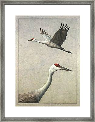 Sandhill Cranes Framed Print by James W Johnson