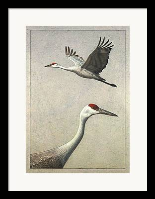 Sandhill Crane Framed Prints