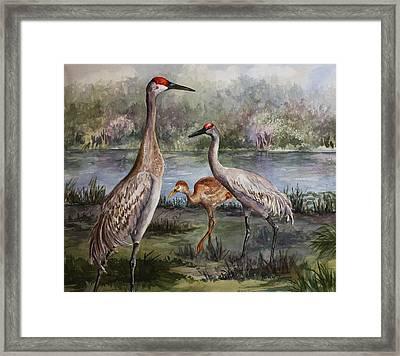Sandhill Cranes On Alert Framed Print by Roxanne Tobaison