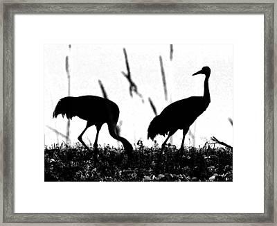 Sandhill Cranes In Silhouette Framed Print