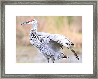 Sandhill Feather Ruffle Framed Print