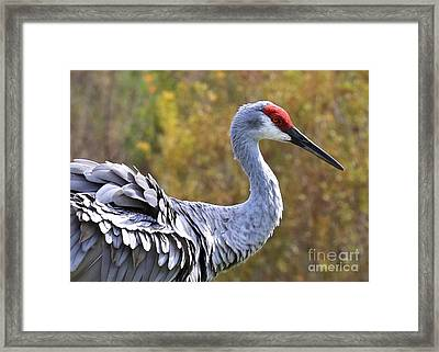 Sandhill Feathers Framed Print