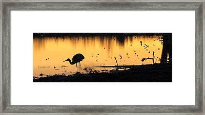 Sandhill Sunrise Framed Print