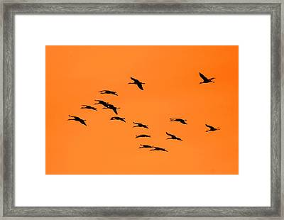 Sandhill Sunrise Framed Print by T C Brown