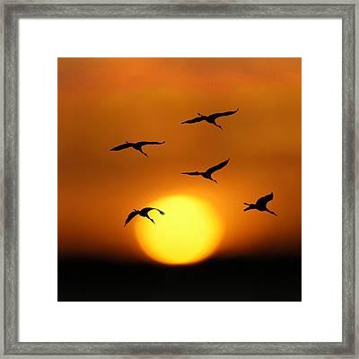 Sandhill Sunset Framed Print