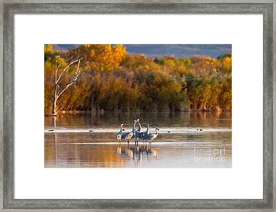 Six Sandhill Cranes Framed Print
