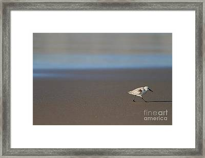 Sandpiper At Mcclure Beach Point Reyes California - 5d21353 Framed Print by Wingsdomain Art and Photography