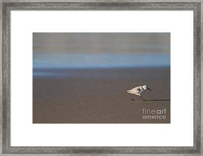 Sandpiper At Mcclure Beach Point Reyes California - 5d21353 Framed Print