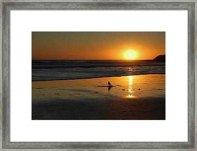 Sandpiper At Natural Bridges Santa Cruz Framed Print by Garnett  Jaeger
