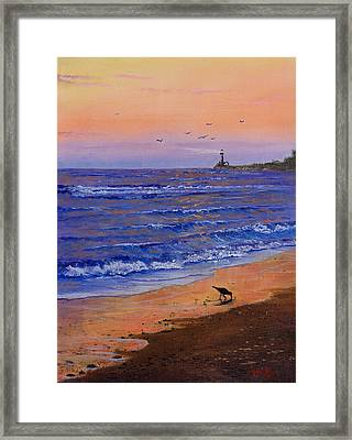 Sandpiper At Sunset Framed Print by C Steele