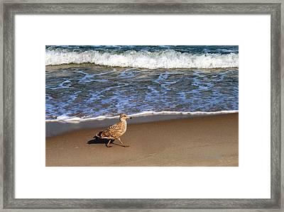 Sandpiper At Ortley Beach, Nj Framed Print