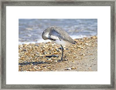 Sandpiper Framed Print by Betsy Knapp
