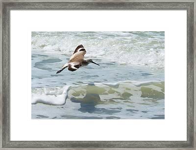 Sandpiper Flight Framed Print