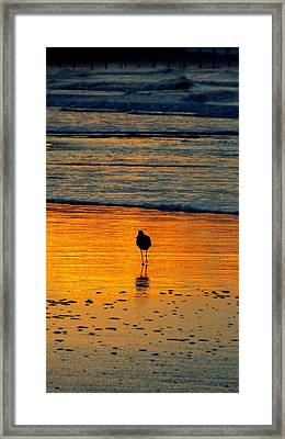 Sandpiper In Golden Dawn Surf Framed Print