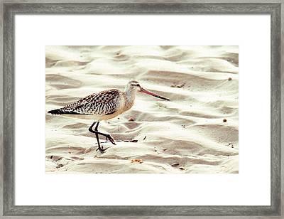Sandpiper In Merimbula Framed Print