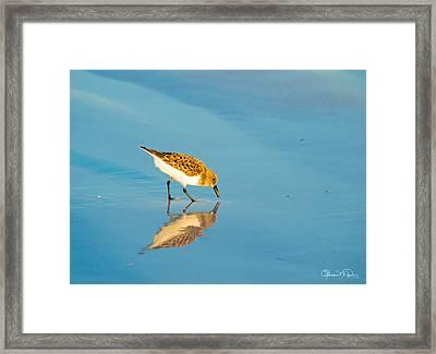 Sandpiper Mirror Framed Print