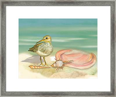 Sandpiper On Beach Framed Print by Anne Beverley-Stamps