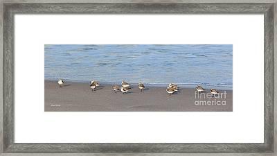 Sandpiper Siesta Framed Print by Michelle Wiarda
