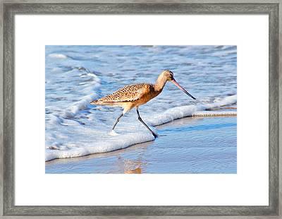 Sandpiper Stroll Framed Print
